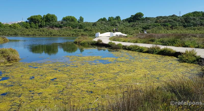 Descubre Menorca - Albufera d'es Grau - Ruta Sa Gola