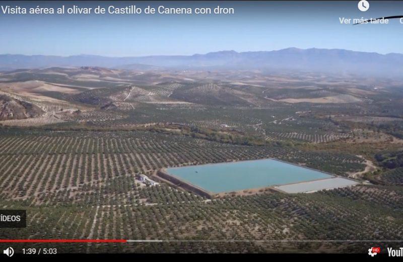 Visita aérea al olivar de Castillo de Canena